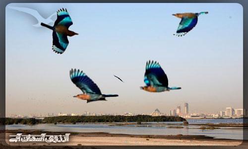 پناهگاه حيات وحش راس الخور دبي _ آسمان آبي