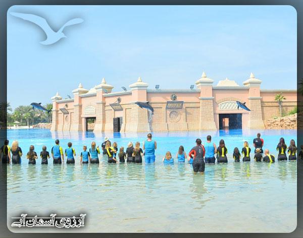 خليج-دلفين-دبي-امارات